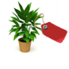 bitki-kiralama08-160